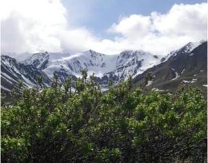 shrubs_mountain.jpg