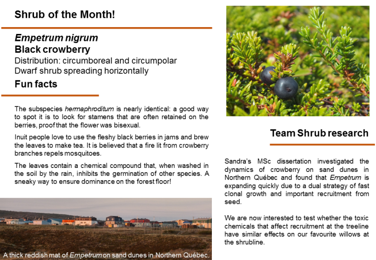 Shrub_of_the_month_Empetrum