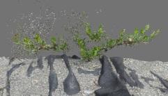 3D shrub model