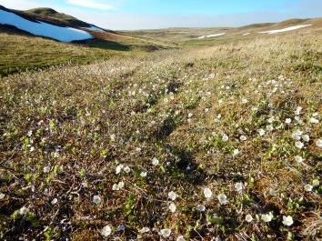 Ice Creek East full of flowers