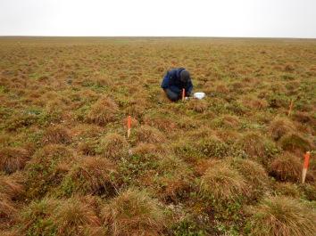 Jakob taking soil moisture measurements at the phenology plots.