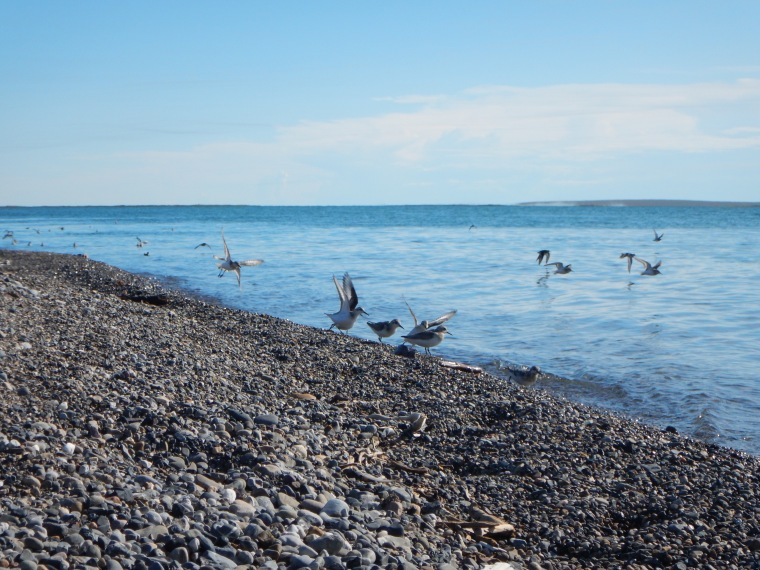 Shorebirds on the beach