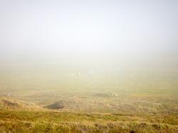 Fog over the floodplain