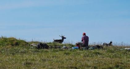 A close caribou encounter
