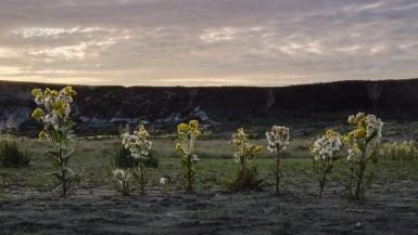 Mastodon flowers on the slump