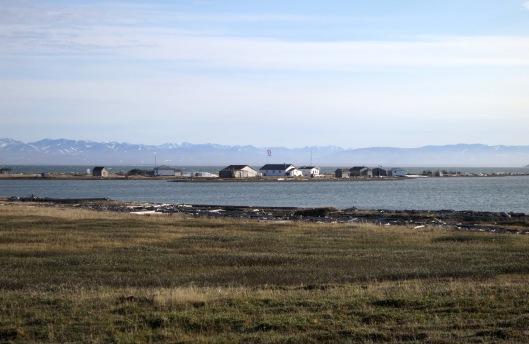 Pauline Cove on Qikiqtaruk in June.