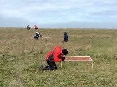 Grass and dryas dominated Komakuk