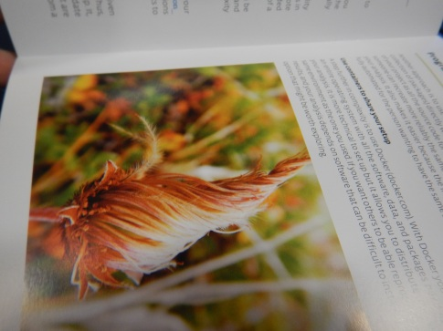 Also spotted in the Exhibition Hall - the new BES guide to reproducible code, featuring a Dryas integrifolia photo by Isla!