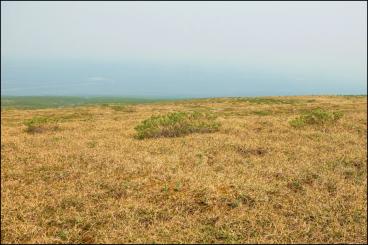 tundra_SAB
