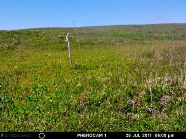 25 July 2017 - Komakuk vegetation type