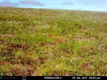 25 July 2017 - Herschel vegetation type