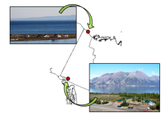 From Qikiqtaruk southwards to Kluane - the journey of some of our willows!