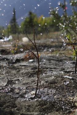 Drop by drop, water sinks into the dry soil in Kluane.